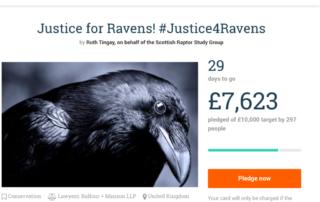 Justice4Ravens