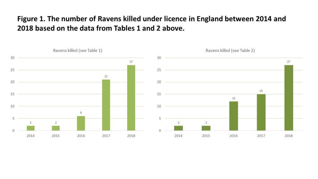 Raven graphs