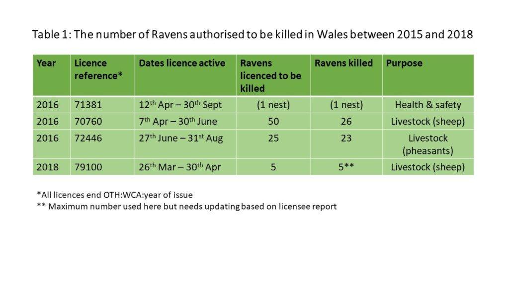 Ravens killed in Wales