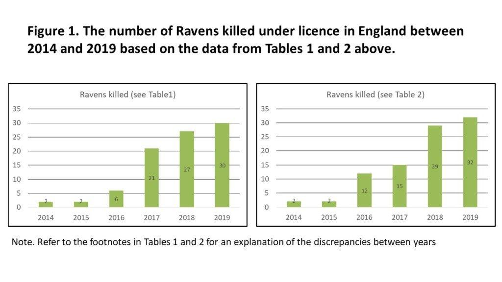 Raven graphs 2019