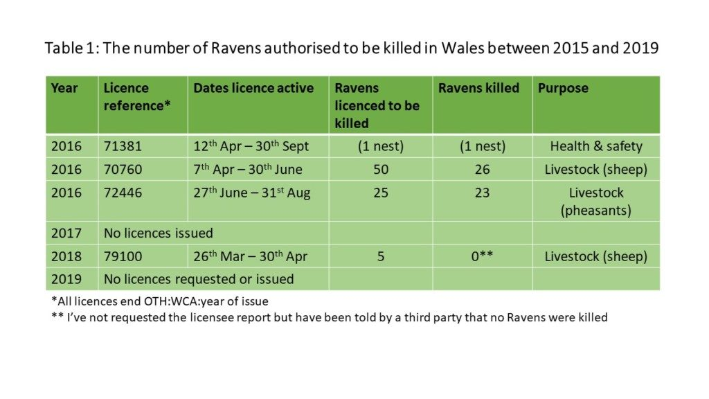Ravens killed in Wales 2019
