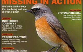 Birdwatch cover