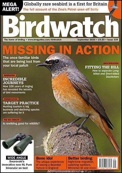 Birdwatch cover