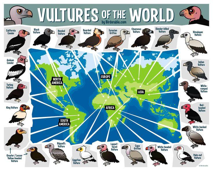 Birdorable Map