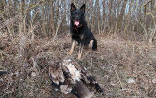 Dog and eagle